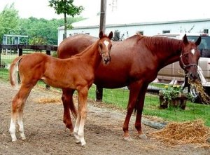 Baby Stampede with his mom