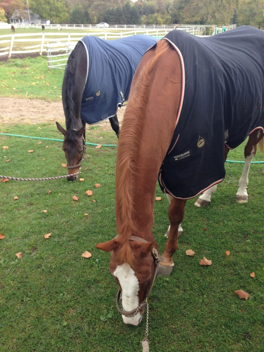 P grazing with his girlfriend Willow today in their matching Rambo Helix sheets